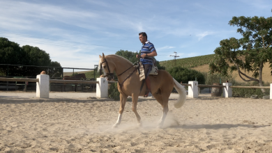 Photo of Especial Feria del Caballo 2019 (I Parte): La Preferia